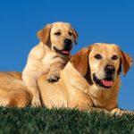 がん探知犬導入