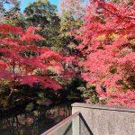 愛知県緑化センターと昭和の森で紅葉を